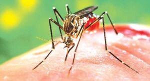 Sobe para 308 os casos de Dengue em São Carlos