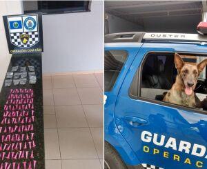 Canil da GM apreende drogas em terreno no São Carlos 5