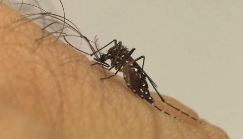 Ibaté contabiliza 23 casos de dengue