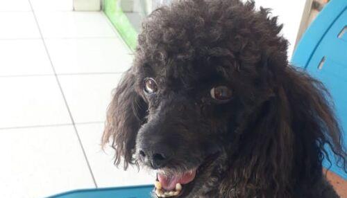 Homenagem da Funerais Pet ao cachorrinho Benício
