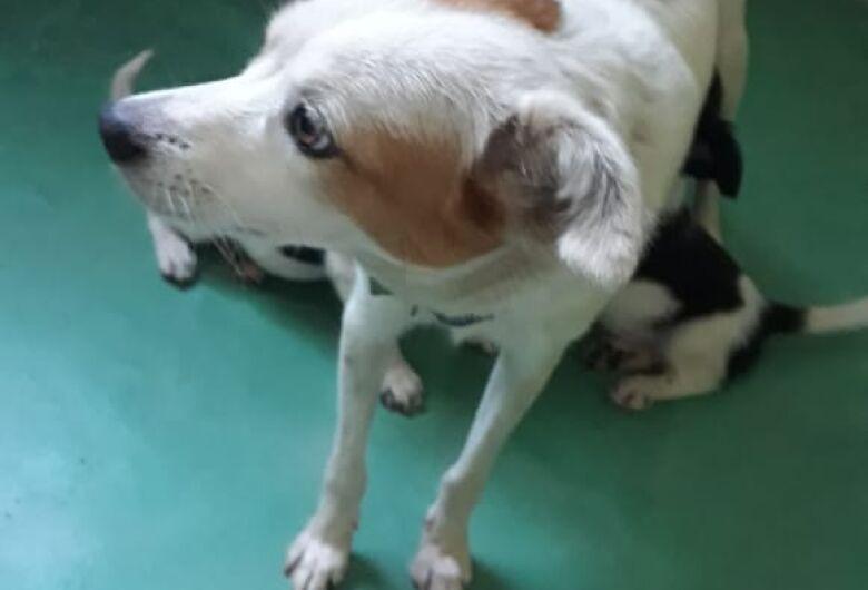 Cachorra é abandonada com 04 filhotes no Centro de Zoonoses de Ibaté