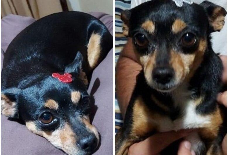 Cachorra Mel desaparece na Vila Prado