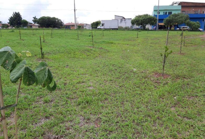 UFSCar e Rotary Pinhal fazem plantio de árvores no bairro Arnon de Mello
