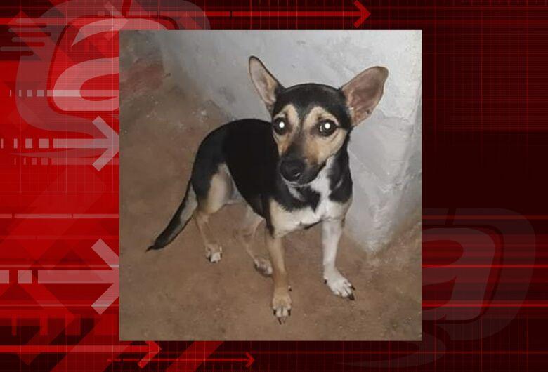 Cachorrinha Mel desaparece no Aracy 2. Ajude à encontrá-la