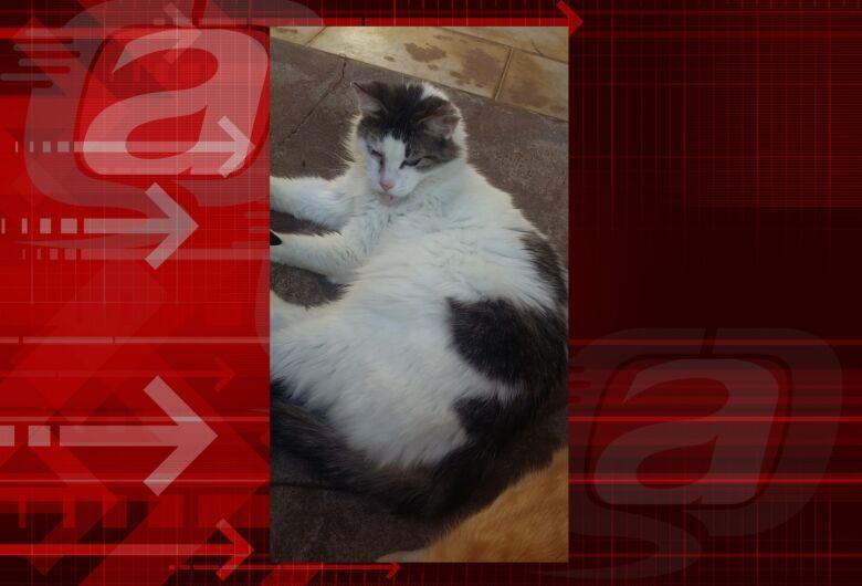 Homenagem da Funerais Pet a gatinha Branca