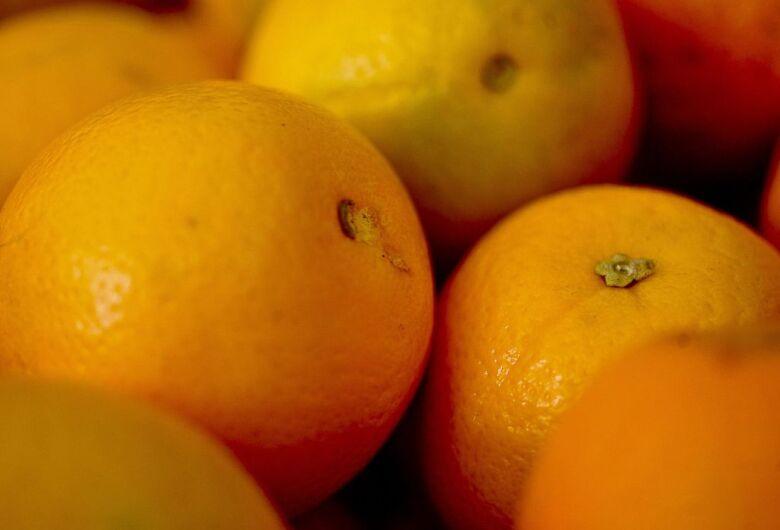 Vereador da região é detido acusado de furtar laranja