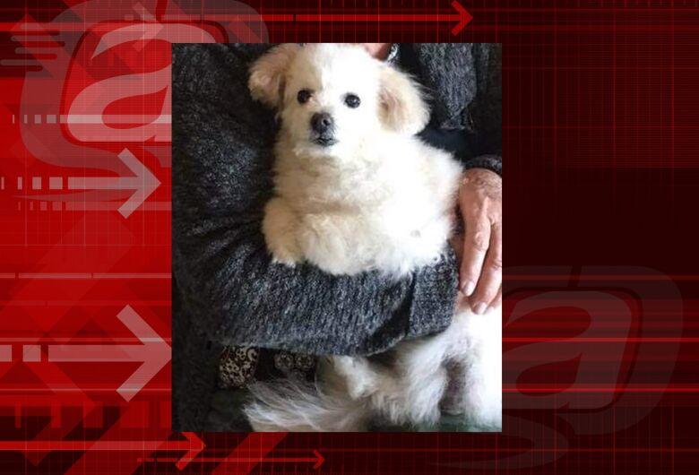Homenagem da Funerais Pet ao cachorro Tico