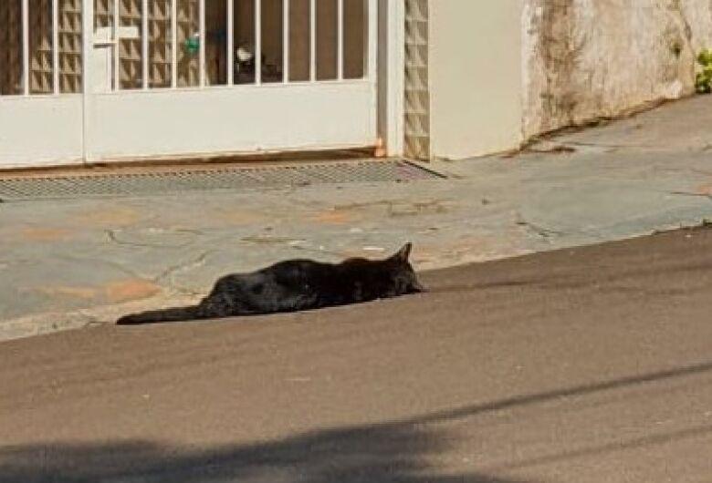 Moradores denunciam mortes de gatos por envenenamento no centro de São Carlos