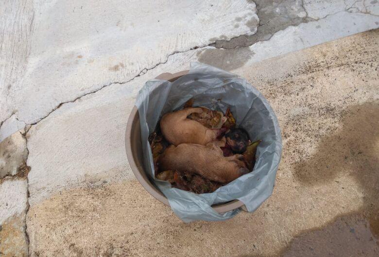 Idoso é preso em flagrante após jogar filhotes de cães no lixo