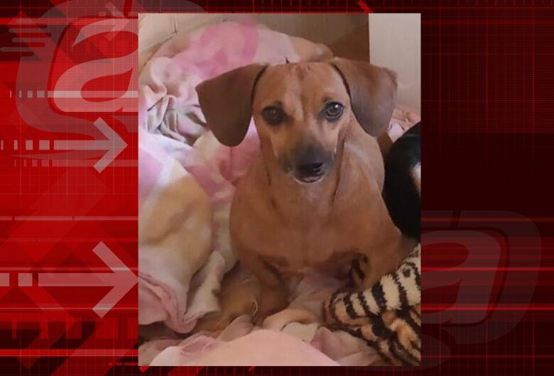 Cachorra Teca desaparece no Tijuco Preto