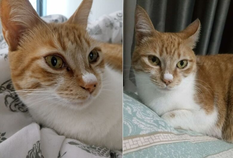 Gatinha Vivi desaparece no Boa Vista. Ajude a encontrá-la