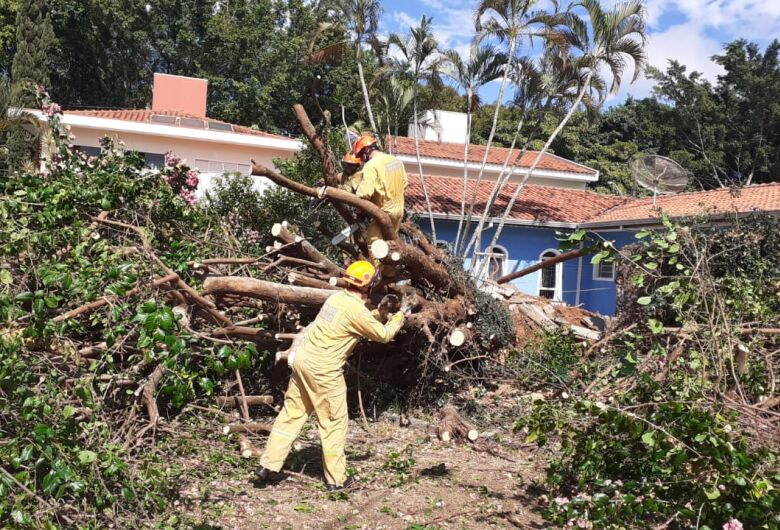 Árvore de grande porte cai, derruba poste e arranca fiação no Nova Santa Paula