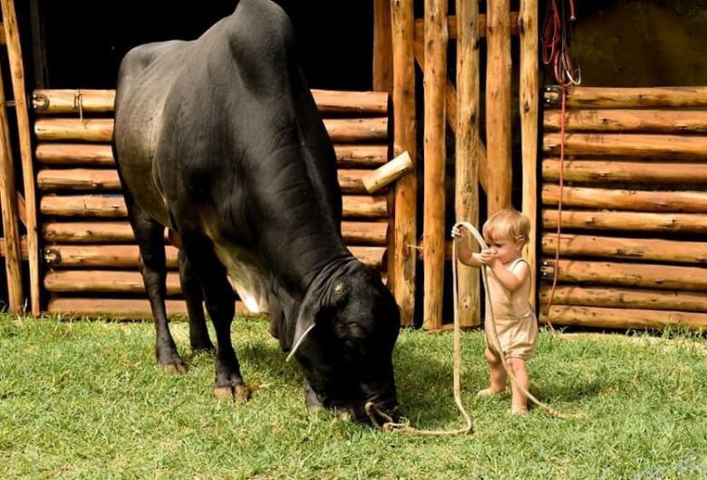 Adestramento de animais e Pitó e Davi Silva são atrações do AGROARENA deste domingo
