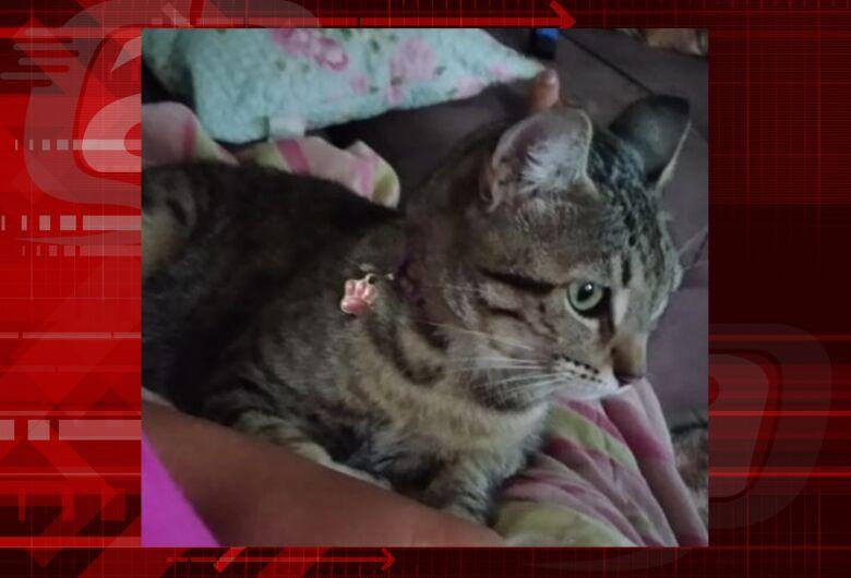 Gatinha Mia desaparece na região do Bicão