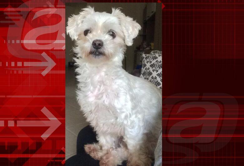 Cachorrinha Maya desaparece no Santa Felícia. Ajude a encontrá-la
