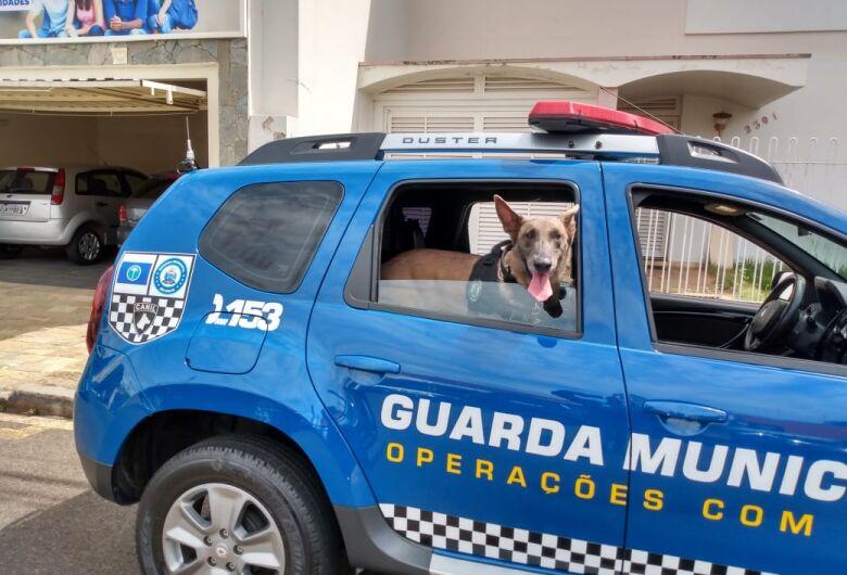Cachorra Naja da GM localiza drogas em terreno abandonado