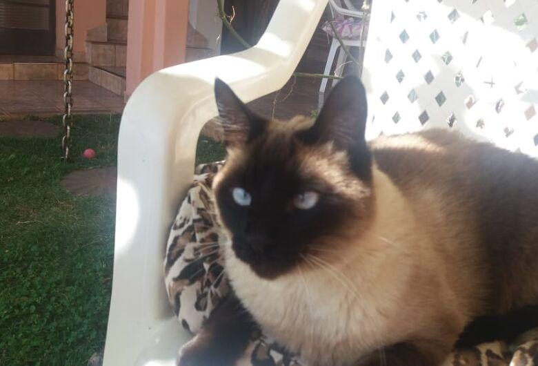 Procura-se por gato desaparecido na Vila Monteiro