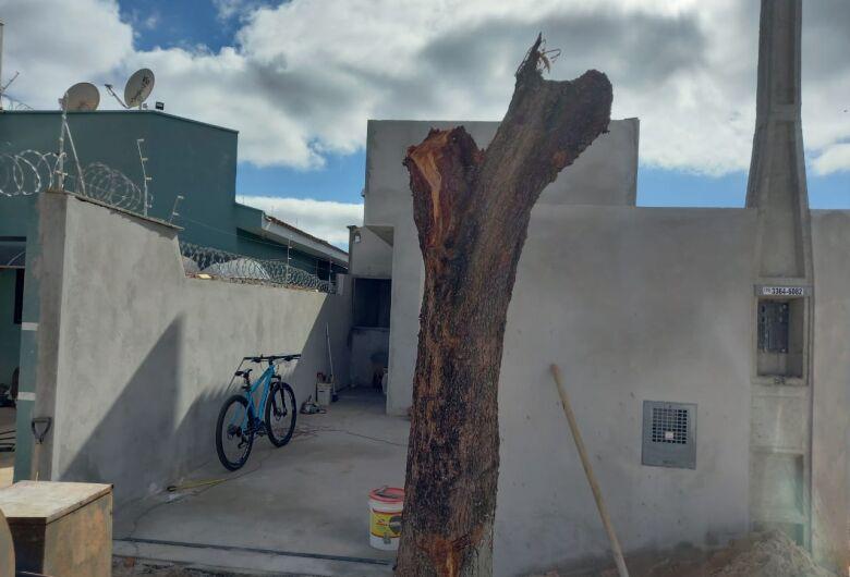 Morador é multado pela Polícia Ambiental após realizar poda drástica de árvore no Cidade Aracy