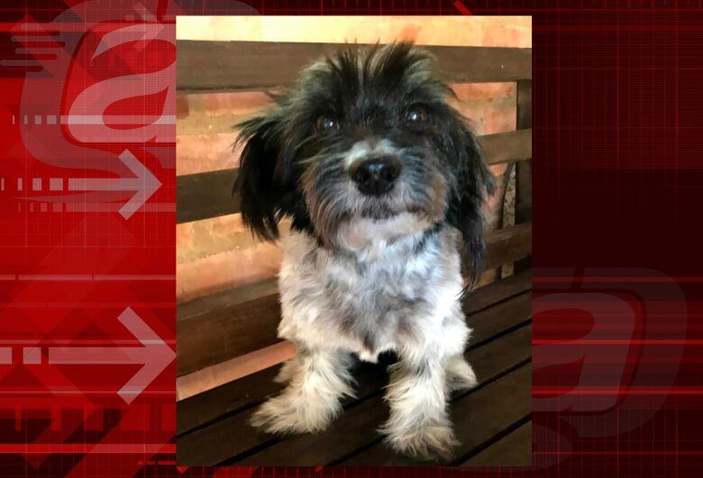 Cachorrinha Nina desaparece no Planalto Paraíso. Ajude a encontrá-la