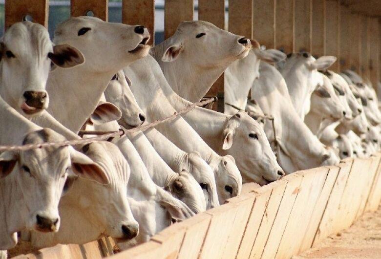 Pesquisador da Embrapa São Carlos garante que dieta de alto concentrado é vantajosa para o gado