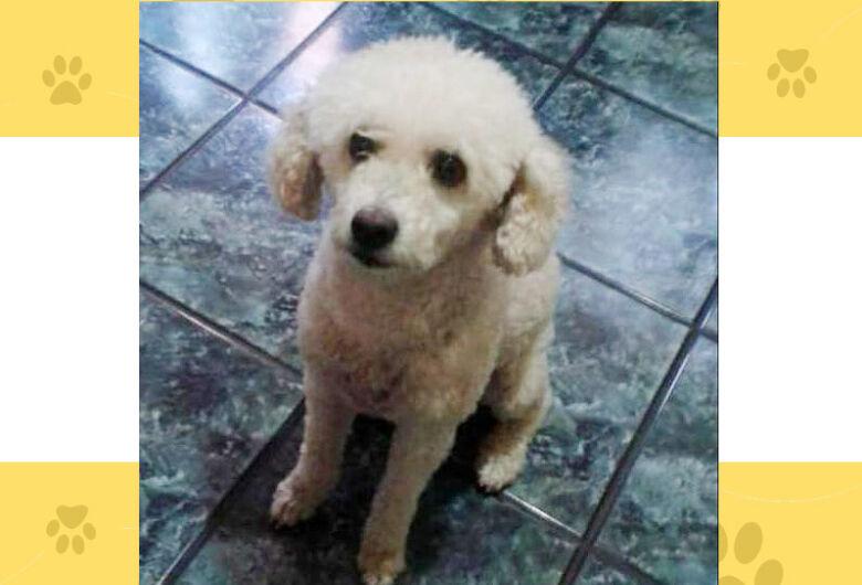Cachorrinha Penélope desapareceu na região do Jd. Botafogo; ajude a encontrá-la
