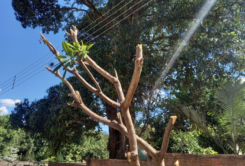 Homem recebe advertência da Polícia Ambiental após poda de árvore