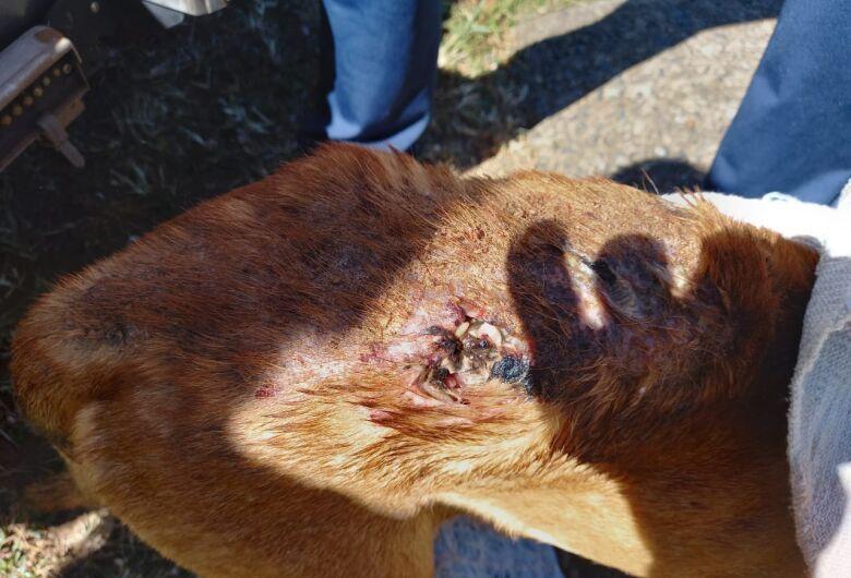 Mulher é detida por maus-tratos a cachorro em Ibaté