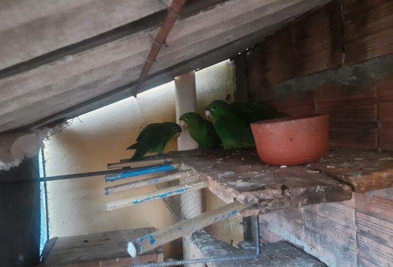 Aves silvestres são flagradas em cativeiro no Planalto Verde