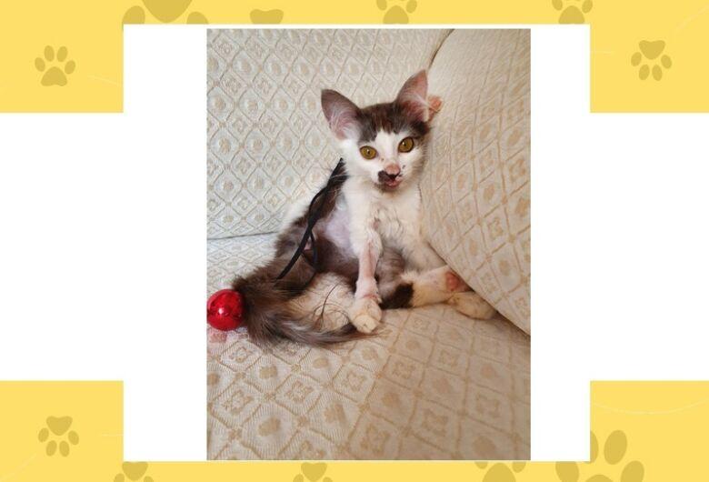 Homenagem da Funerais Pet a gatinha Lilith