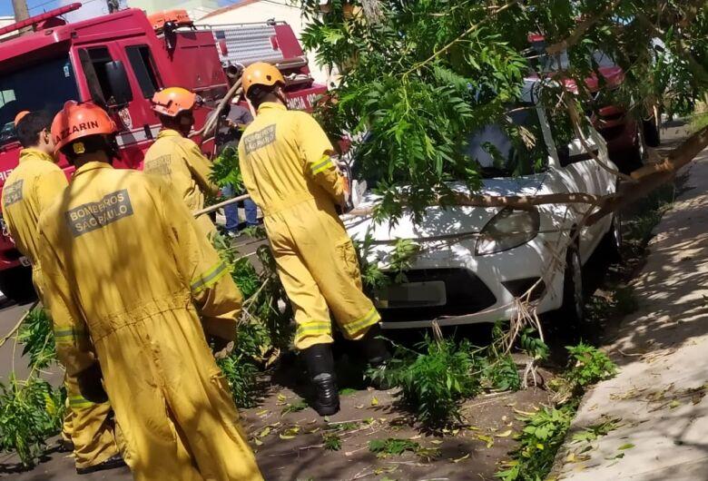 Galho de árvore cai sobre carro no Cidade Jardim