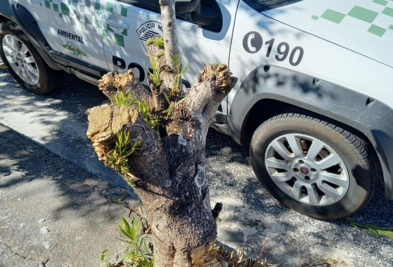 Moradora do Douradinho recebe advertência após podar árvore desnecessariamente