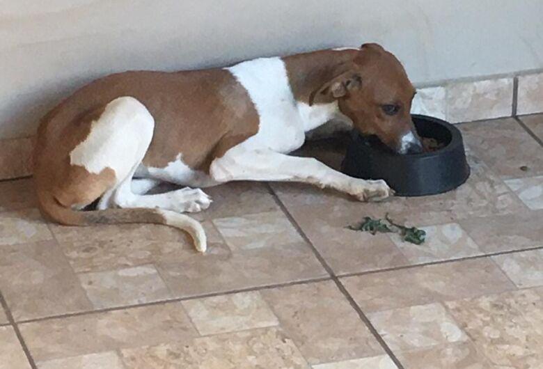Homenagem da Funerais Pet à cachorrinha Liza