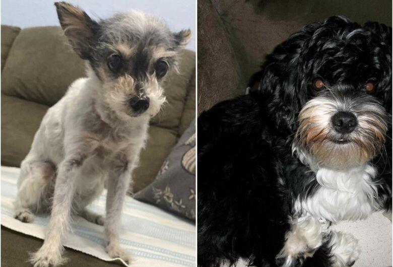 Homenagem da Funerária Santa Cruz às cachorrinhas Jully e Lola