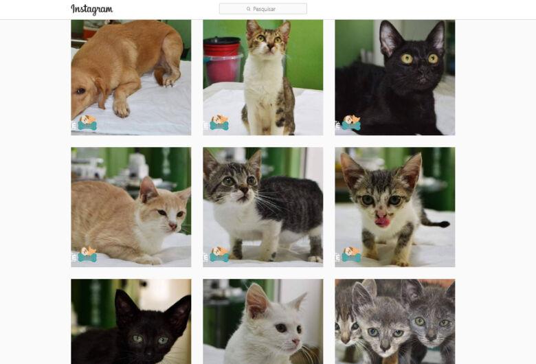 CCZ divulga animais para adoção consciente no Face e Insta da Prefeitura de Ibaté