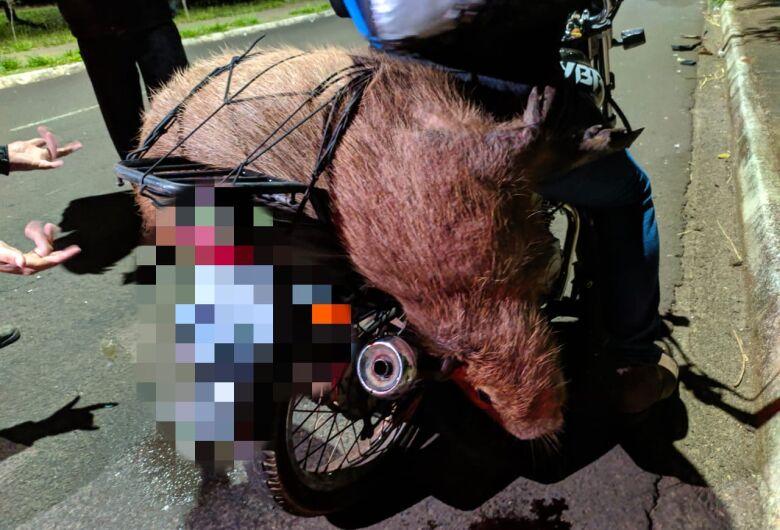 Motogirl fica ferida após atropelar capivara