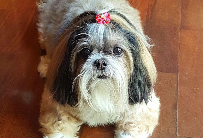 Homenagem da Funerais Pet à cachorrinha Mel