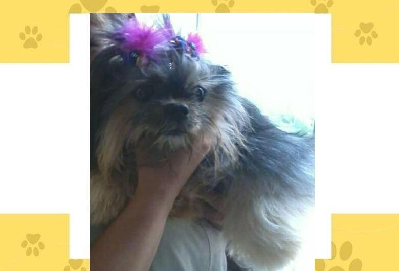 Homenagem da Funerais Pet a cachorrinha Sammy