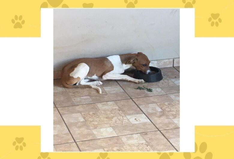 Homenagem da Funerais Pet a cachorrinha Liza