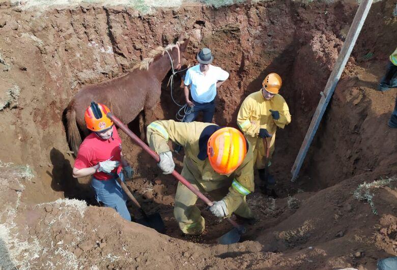 Bombeiros salvam mula que caiu em buraco no Romeu Tortorelli