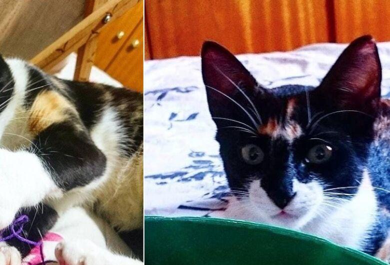 Gatinha Nala desapareceu em Itirapina. Ajude a encontrá-la