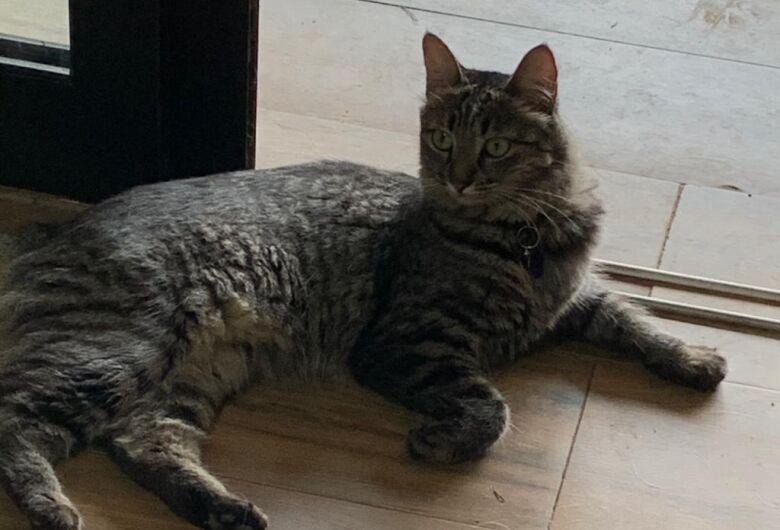 Gatinha desaparece na região do Parque Fehr