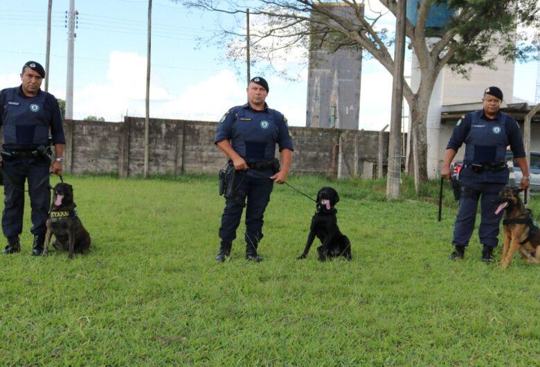 Murphy participa das operações do Canil da Guarda Municipal