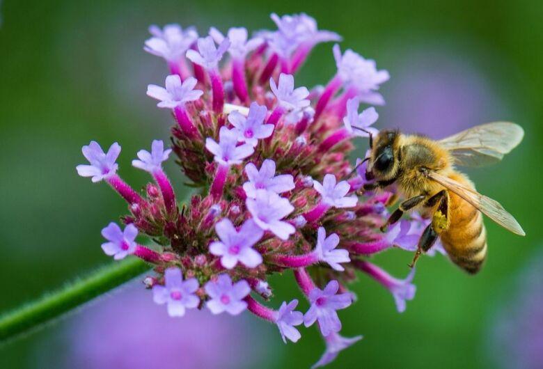 Técnica menos agressiva ao meio ambiente detecta agrotóxicos em abelhas e no pólen