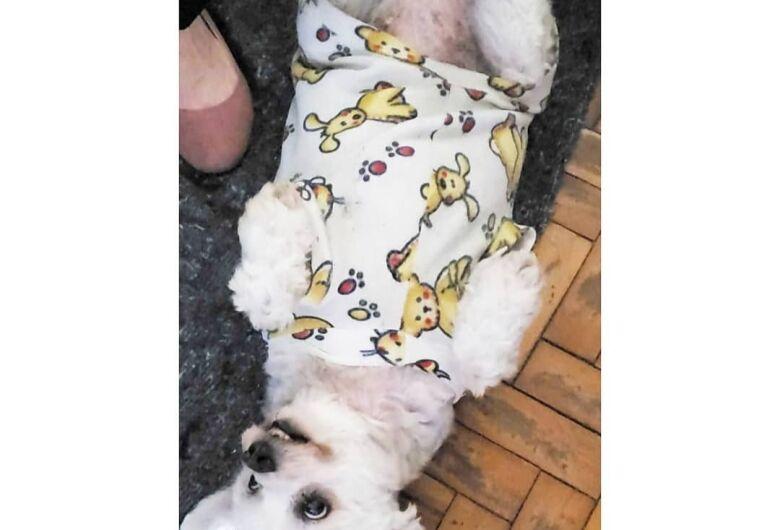 Homenagem da Funerais Pet a cachorrinha Pandora