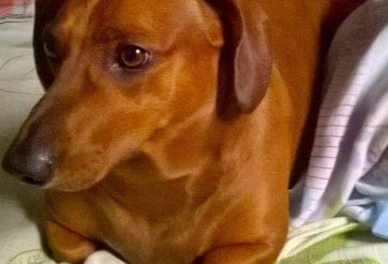 Homenagem da Funerais Pet ao cachorrinho Nick