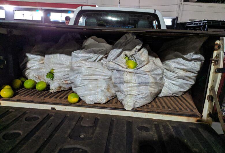 Ladrão é detido após furtar 300 kg de laranja na mesma fazenda onde rapaz foi morto com tiro na nuca