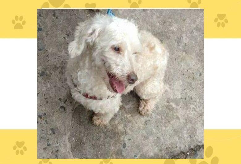 Homenagem da Funerais Pet ao cachorrinho Saydi