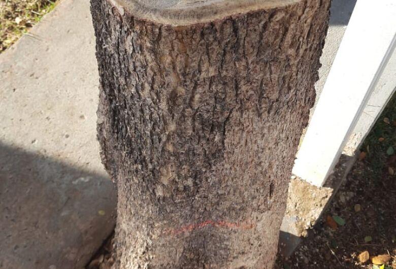 Homem é multado em 500 reais após cortar árvore em condomínio