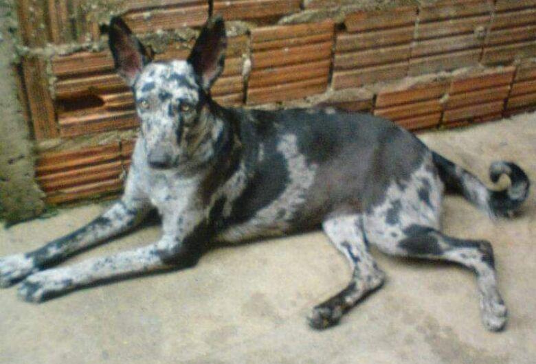 Homenagem da Funerais Pet à cachorrinha Chica