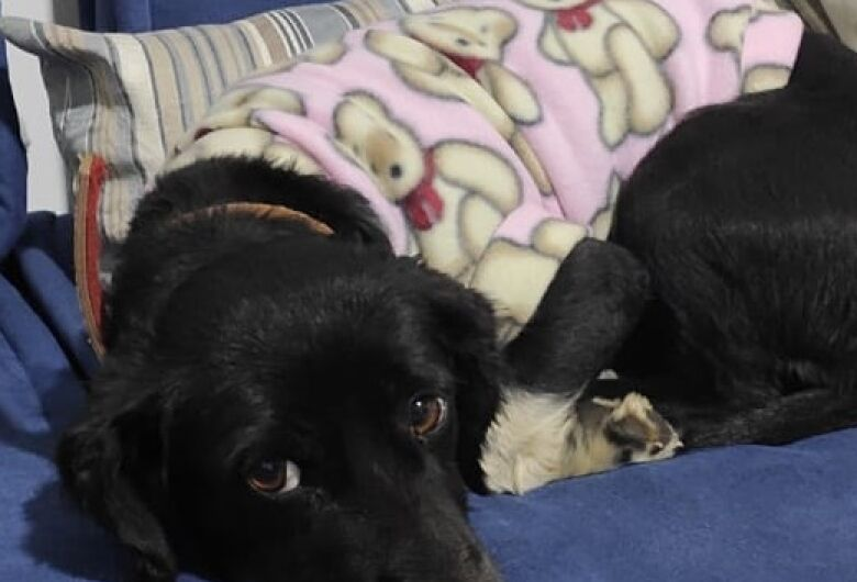 Cachorrinha Amora desaparece no Belvedere